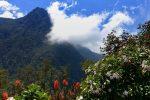Rennradreise Alto de Letras: Wunderschöne Vegetation