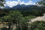 Der Río Cauca schlängelt sich durch ein grünes Plflanzen-Meer