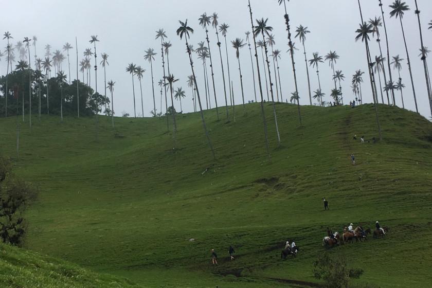 "Rennradreise ""Ruta del Café"": Das berühmte Tal von Cocora (Valle de Cocora)"